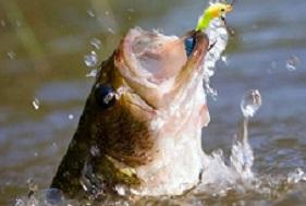Pike perch fishing